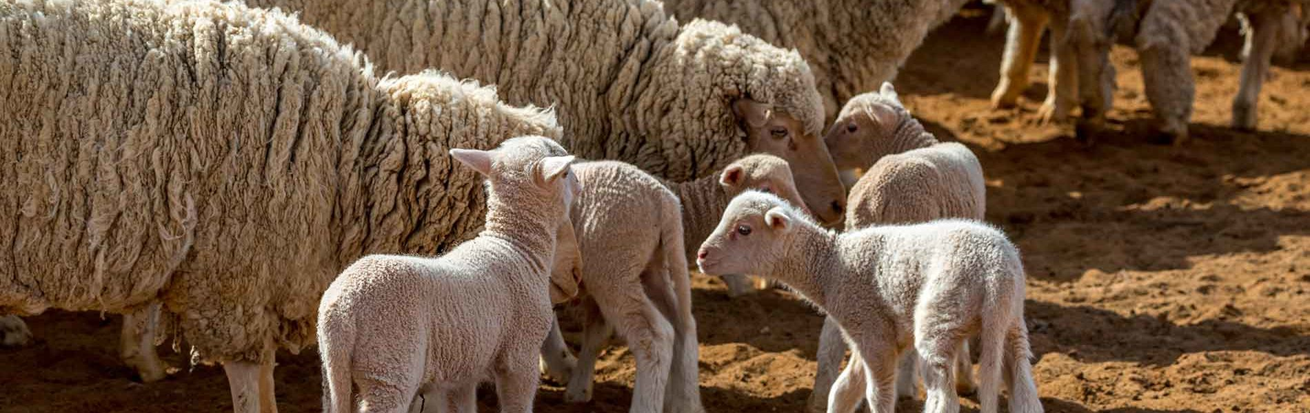 Ethical & Sustainable Wool